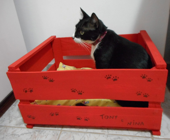 Customizando caixa para gatos